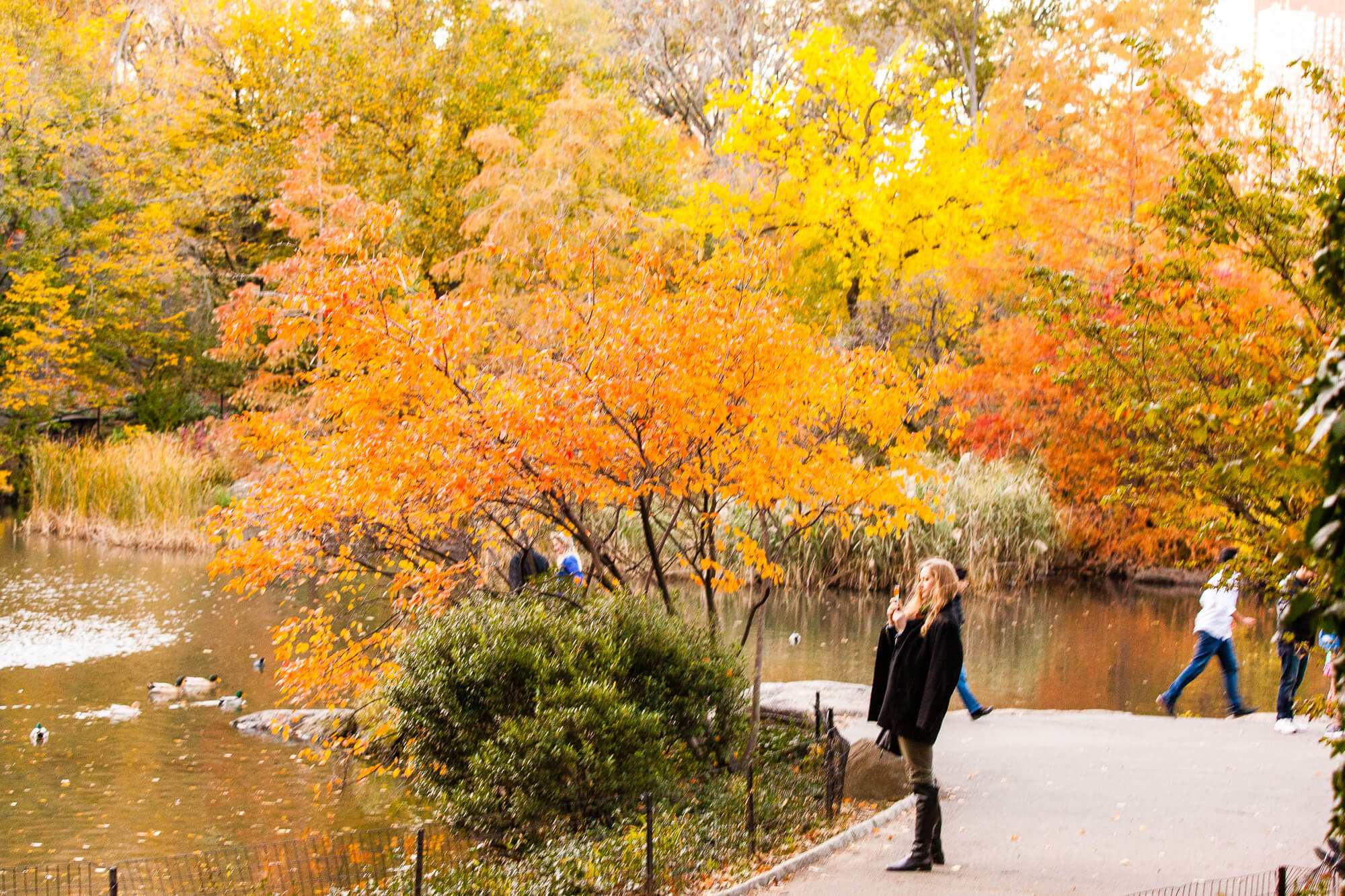 Love Of Mode Fall In Central Park