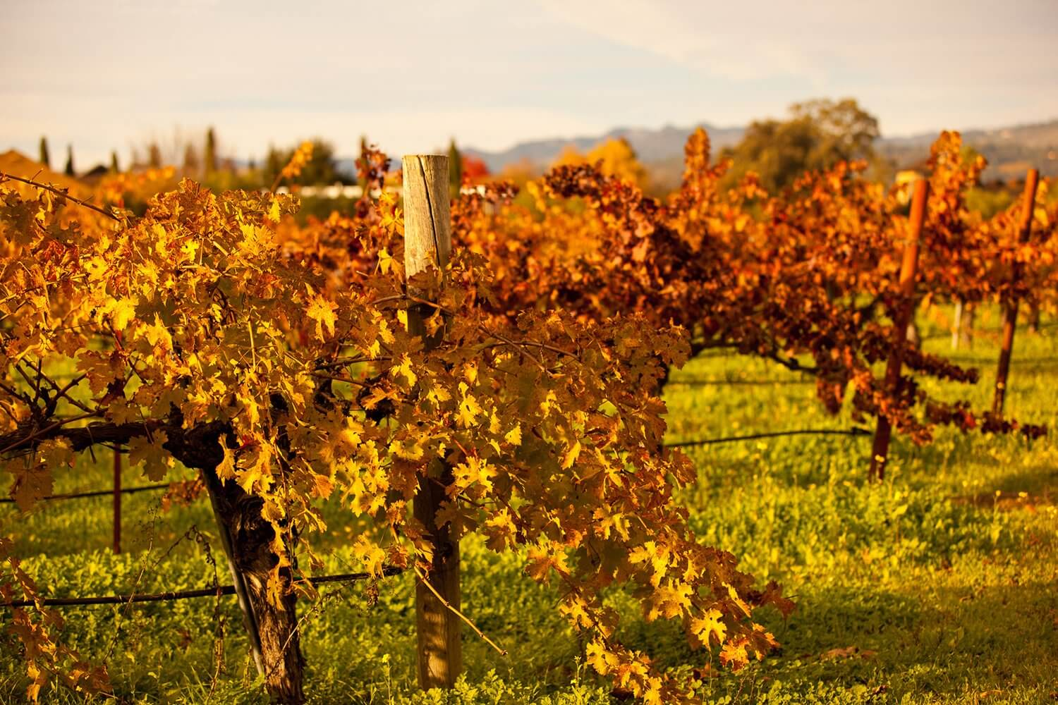 Love Of Mode Napa In Fall